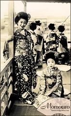 Momotaro - Taisho Era Maiko (Naomi no Kimono Asobi) Tags: kyoto antique postcard maiko geiko geisha    kimono obi gion kamogawa pontocho   taisho momotaro    vintagephotograph      immortalgeishacom