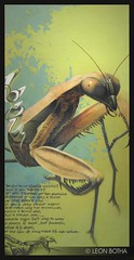 Mantis-Style *SOLD* (Leon Botha) Tags: africa art painting lemon south leon swords liquid slices botha of