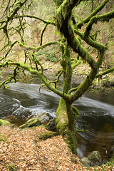 Black Linn pools, Falls of the Braan, The Hermitage; Dankeld, Scotland