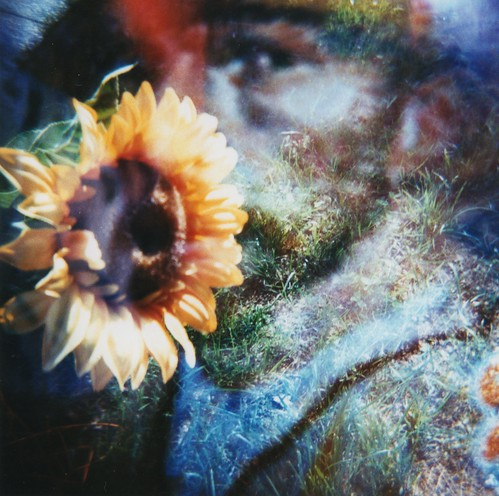 van gogh / sunflower