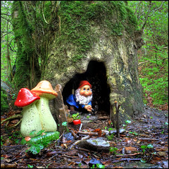 Shrine... (angus clyne) Tags: tree mushrooms scotland gnome ashtree dunkeld hollow shrooms birnam flikcr phallicmushrooms pershire inchewenburn