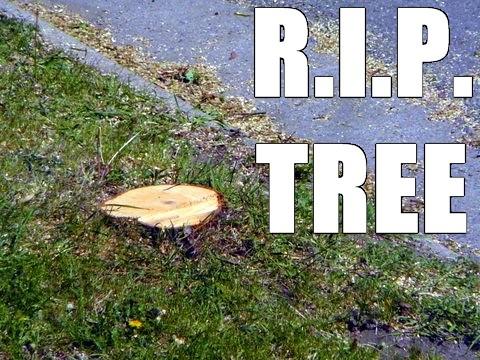 RIP Tree