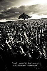 [ In all chaos there is a cosmos, in all disorder a secret order ] (bonnix (Scotty)) Tags: bw white black tree field feld schwarz weis