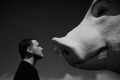 Human Flu (ICT_photo) Tags: ontario piggy mask guelph shakespeare swine staredown swineflu ianthomas h1n1 giantpig ictphoto