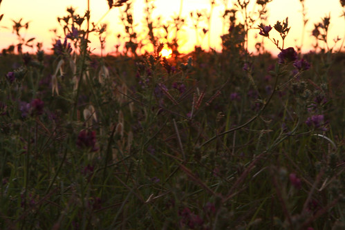 Sunset behind the weeds
