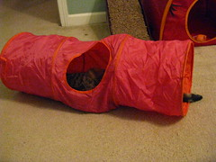 Maggie stretched out in her new tunnel