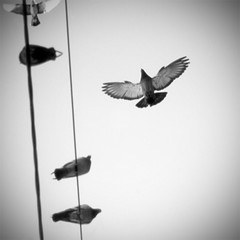 birdies (Victor Bezrukov) Tags: sky white black bird film nature up square photography town fly pentax air perspective free cable electricity epson medium nostalgy v500 epiceditsselection stran9e