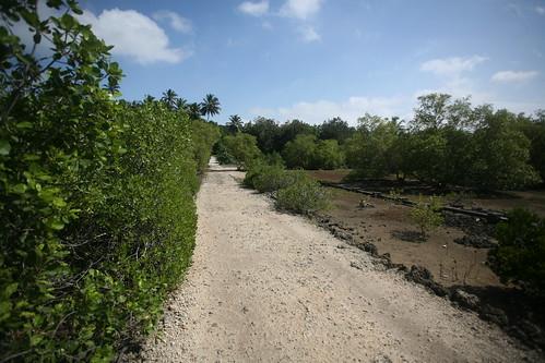 mangrove hiway of Uzi
