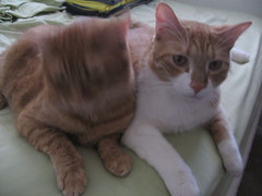 Janus cats (joie de poulpe) Tags: cats cerberus willied satchelle