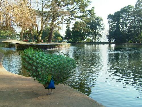 Palácio de Cristal -  lago  - 2004/01