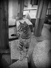urban kitty (Kelly Hyde) Tags: cat kedi cmwdblackandwhite