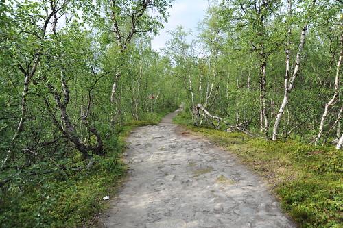 林の中へ。