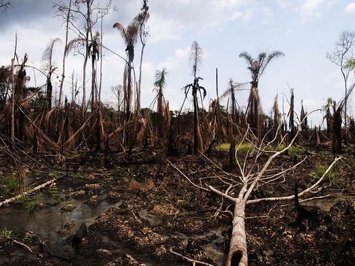 Niger Delta oil disaster av SU