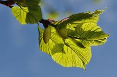 Spring colours (Janek Kloss) Tags: ireland tree colors canal spring colours walk grand kildare celbridge irlandia nikkor105mmf28gvrmicro hazelchatch