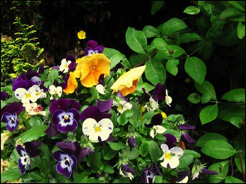 flowery flowers