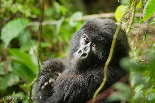 RYALE_Rwanda_Uganda_Safari-66