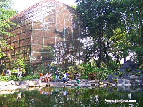 Kebun Bibit Surabaya - Surabaya - East Java