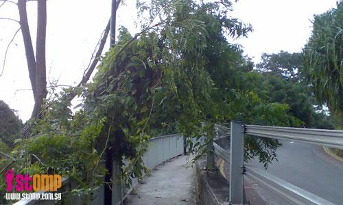 Overhanging branches at Mount Faber sidewalk a nuisance to pedestrians