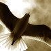 Abre tus alas, arriésgate a volar!