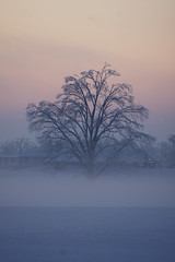 February Sunset (simplegiftsphoto) Tags: trees winter sunset snow ourkentucky