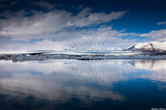 Circle of Life (skarpi - www.skarpi.is) Tags: life sky lake snow reflection ice reflecting iceland swan wildlife postcard lagoon glacier seal geographic jokulsarlon jkulsrln jkull wintertrip refect ln pstkort skarpi