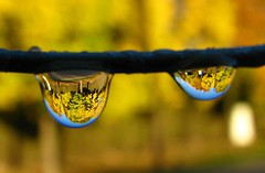 otoño en una gota (.el Ryan.) Tags: water argentina may drop mendoza otoño gota chacrasdecoria