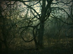 The Lasso Tree (deepintheforestcat) Tags: spooky wilderness unusualtree thelassotree ancientoaktrees