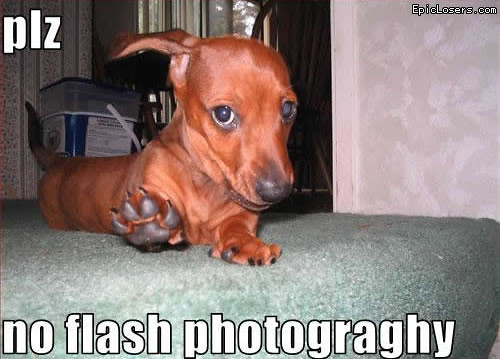Please no flash photography - LOLDogs