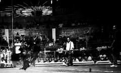 COCKFIGHT (36) (Peter_O'Driscoll) Tags: gambling game spur fight fighter attack culture cockpit clash peter coliseum rooster tradition breed combat gamble betting bet cultural gladiator manok gamecock gambler gallera sabong wager bloodsport cockfighting odriscoll stamina warrier panay gamefowl hahnenkampf cityoflove iloilocity combatdecoqs rinhadegalo bulang 鬥雞 colseum sagupaan đágà combattimentodigalli bulangan pasampok 闘鶏 닭싸움 riñadegallos петушиныебои ตีไก่ sabonero manoktukaan peterodriscoll