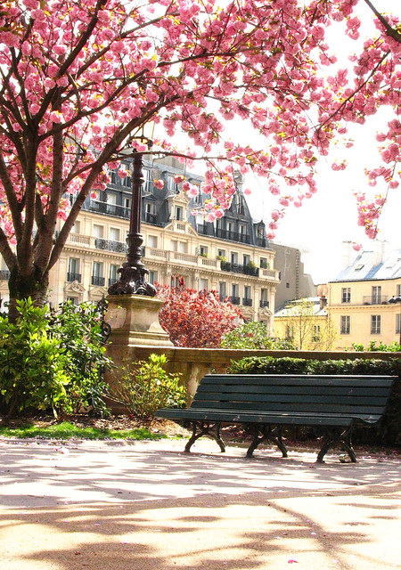 blossoms in the park, paris