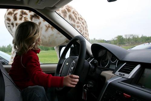 Passeert er een giraf ...
