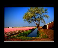 Landscape (Theo Kelderman) Tags: landscape nederland netherland april 2009 landschap bollenveld bollenstreek theokeldermanphotography