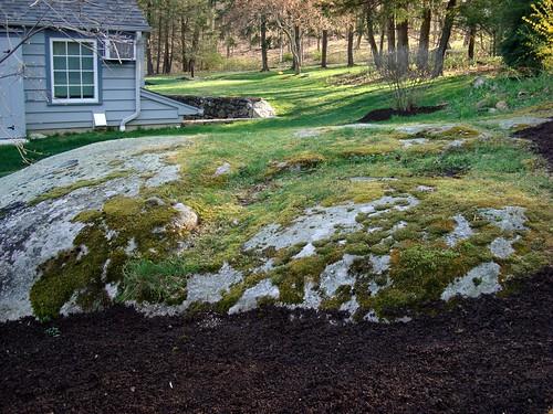 moss gathering