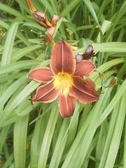 IMAG0030 (Ian Faz) Tags: flowers plants tress nessgardens