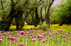 I know you are there (Falling Dreams) Tags: flower tree green nature yellow evening persian flickr iran persia valley dreams iranian hyderabad  hpc shomal     hyderabadi  fallingdreams
