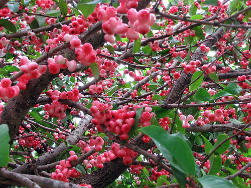 Plantation d'arbre fruitier  3588343803_5537cf3c17