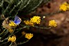 Blue Butterfly (valerius25) Tags: sardegna canon butterfly sardinia digitalrebel farfalla 400d valerius25 valeriocaddeu