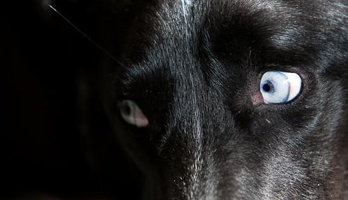 Azul the Dog
