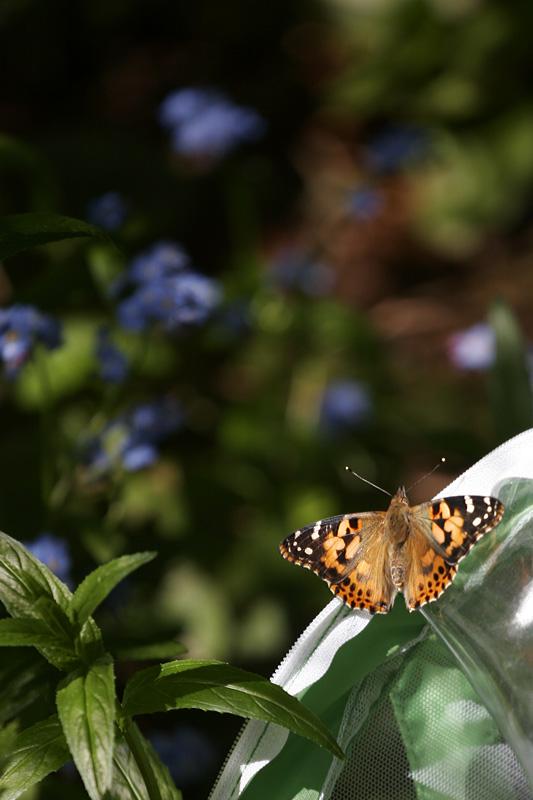 Butterfly_1423