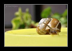 BARRASKILOA (gorla2008) Tags: caracol barraskiloa