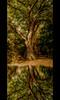 The old Tree (Sam ♑) Tags: tree canon germany deutschland legacy baum hdr bitburg rheinlandpfalz prümzurlay irrel concordians thesecretlifeoftrees sam8883 platinumbestshot flickrvault sailsevenseas eifelkreis trolledproud