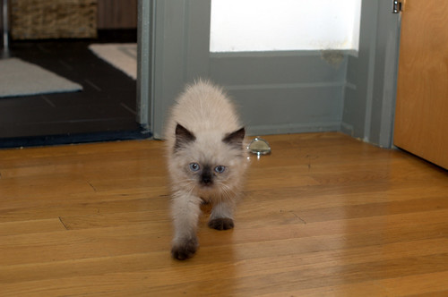 pushkin's first day at home