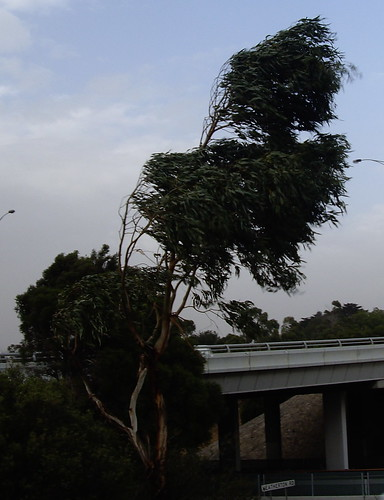High winds in Endeavour Hills this afternoon