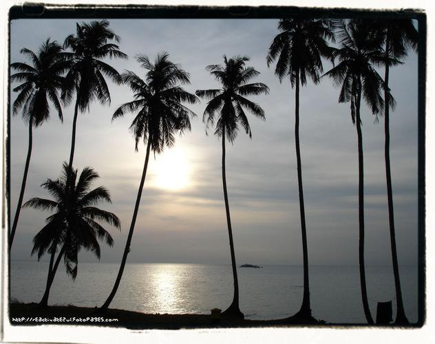 deretan-pokok-kelapa-yang-menggamit-perasaan