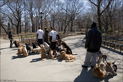Dog sitter a Central Park - NY (Monica M. ) Tags: street nyc people usa newyork america nikon unitedstates gente centralpark manhattan persone bigapple cani statiuniti dogsitter d80 monicamongelli