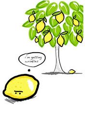courtesty of veggie trader.com