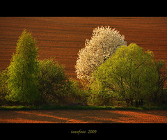 (tozofoto) Tags: trees light colors landscape hungary natur april soe springtime zala supershot outstandingshots theunforgettablepictures overtheexcellence vosplusbellesphotos tozofoto magicunicornverybest obramaestra fleursetpaysages lelitedespaysages