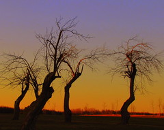 Evening Sunset (**Ms Judi**) Tags: trees orange tree colors beautiful wisconsin wow amazing fantastic branch sundown branches explore stunning magical eveningsunset explored msjudi eveninghour sunworshipers peshtigowisconsin judistevenson enchanbting treesawesome