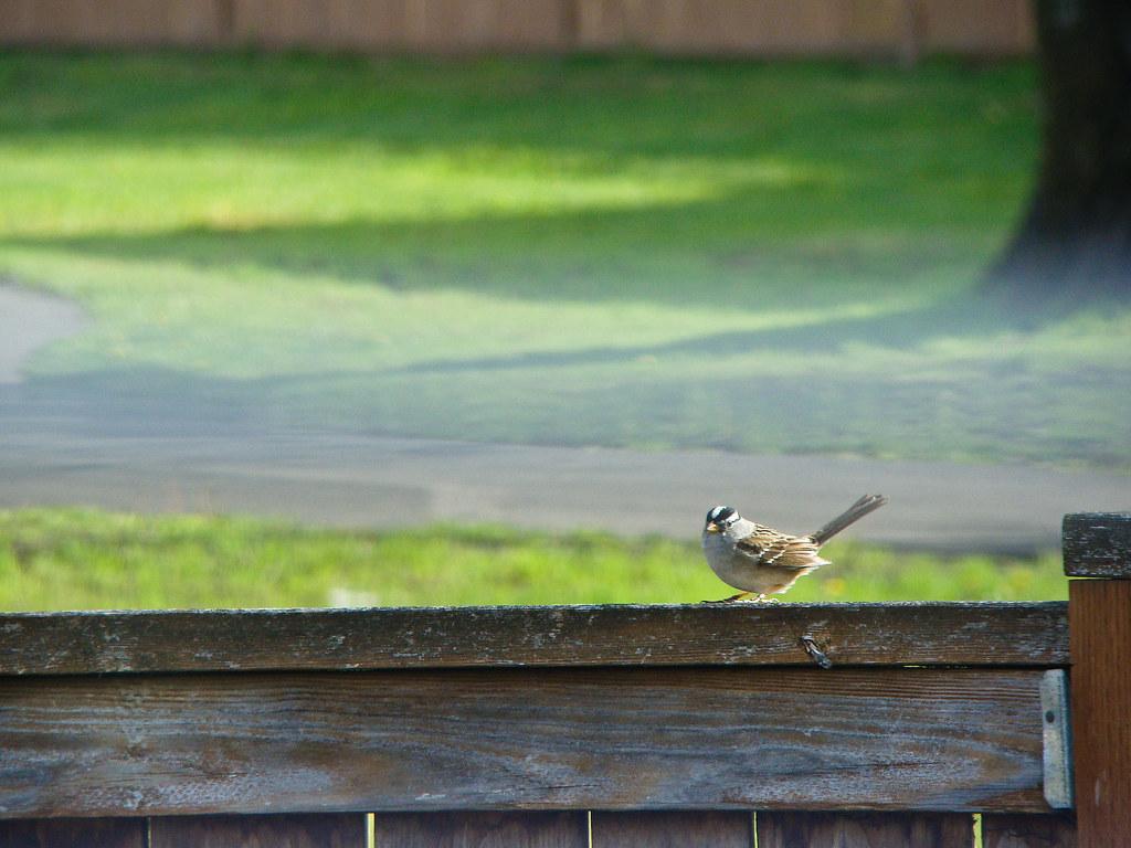 Morning Birdie
