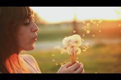 Fitz & Dizzyspells. (The Vision Beautiful) Tags: girl beautiful photo video wind clip montage andrewbird blowin dandelions lesleykerr fitzdizzyspells
